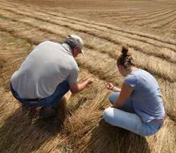 Services Cultivateurs